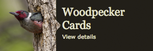 woodpecker greeting cards